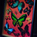 Yves Gentet butterfly hologram